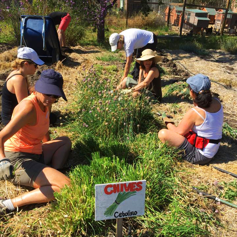 Gardening and Animal Care Volunteer